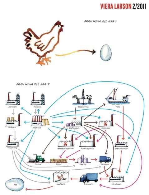 Från höna till ägg